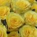 České květiny, online květinářství - zobrazit zboží