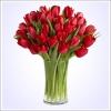 30 červených tulipánů