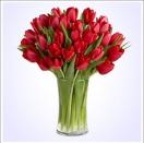 30 červených tulipán