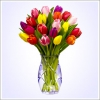 20 barevných tulipán